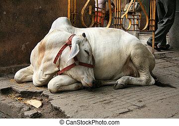 delhi, inde, ville