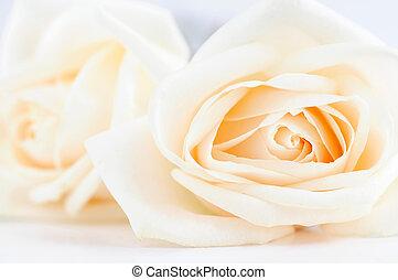 delicado, rosas, bege