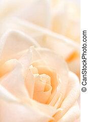 delicado, rosas, beige
