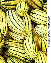 Delicata squash variety