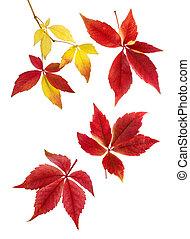 Delicate arrangement of autumn leaves