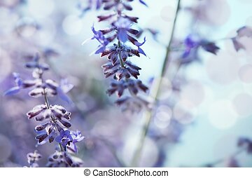 Delicate background with lavender - shallow depth of field