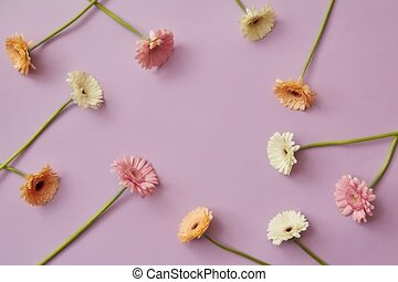 Delicate beautiful pastel colors of gerberas appear and form...