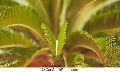 Delicate branches of palm trees. (Shot in Full HD -...