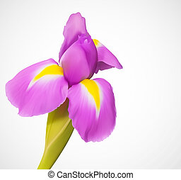 Delicate exotic vector flower