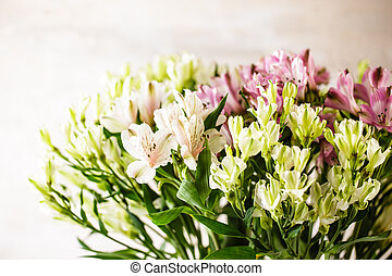 Delicate flowers of Alstroemeria - Flowers of white, green ...