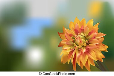 Delicate gold Aster on green background