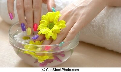 Delicate hands and chrysanthemum, spa salon. Slow motion...