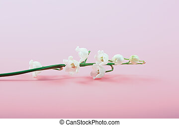 delicate lilies of the valley on a pink background