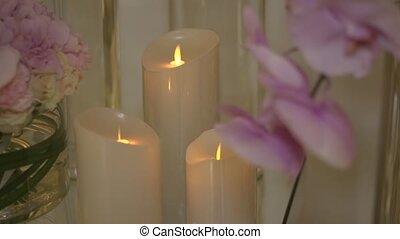 Delicate Orchids in interior design