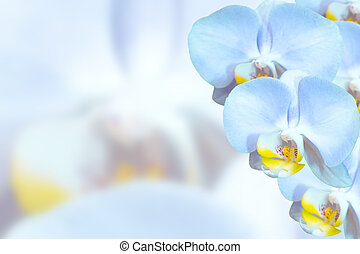 Delicate orchids with blue flowers