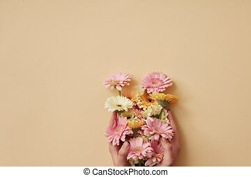 Delicate pastel flowers gerbera grow from women's hands and...