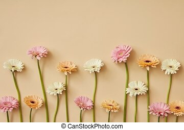 Delicate pastel flowers gerbera growing on a light yellow...