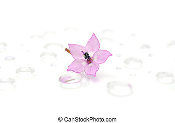 Delicate Pink Flower on Water Drops
