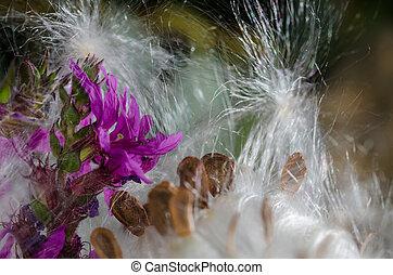Delicate Purple Flower Petals in a Sea of Elegant White...