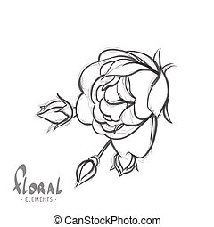 Delicate rose on a white background