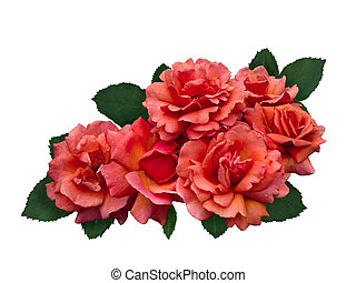 Delicate scarlet roses with a green leaves