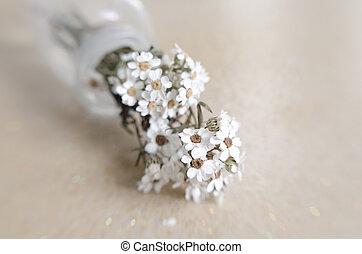 delicate white flower - fragile white flower; soft colors....
