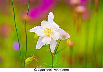 White meadow meadow with white flowers spring illustration delicate white meadow flower mightylinksfo