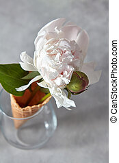 Delicate white peony flower with bud in a wafer cone in a glass standing on a gray stone table.