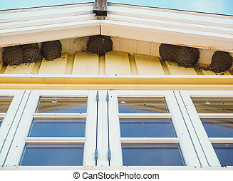 Delichon urbica birds nesting under the eaves over blue...