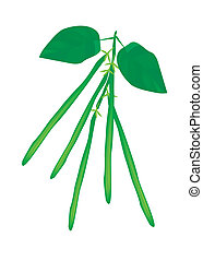 Delicious Fresh Green Beans on A Plant
