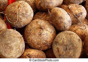 jicama yam bean mexican food vegetable - delicious jicama...