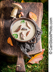Delicious mushroom soup made of noble mushrooms