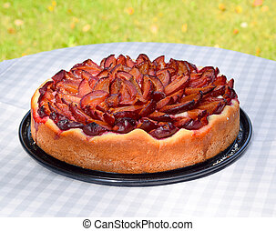 delicious plum pie, freshly baked on display