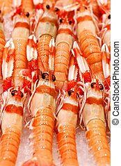 Delicious Raw Langoustines In a Row on Ice closeup on Fish Market Place. Selective Focus