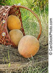 Delicious ripe melons in a wicker basket