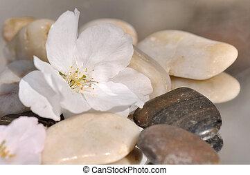 delikat, kirsch blüte, auf, kieselsteine