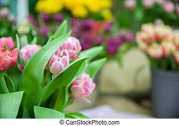 delikat, rosa, tulpen, in, a, wischeimer, umgeben, per, andere, flowers., raum, für, text., fruehjahr, thema, und, feiertag, grüße