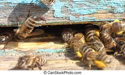 Delivery of pollen to the hive