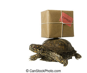 Delivery Turtle