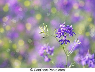 delphinium, bloem