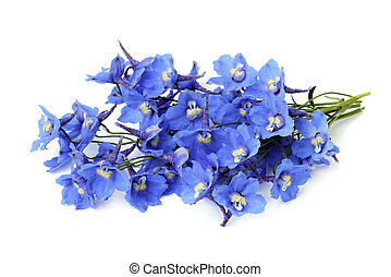 delphinium on a white background