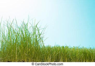 delvis, manikyrera, gräsmatta