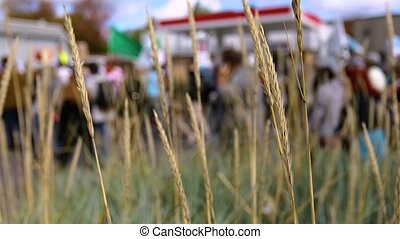 Large peaceful environmental demonstration passing through town. People and buildings are revealed through tall grass with selective focus