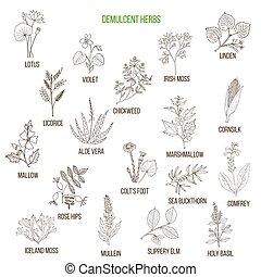 Demulcent herbs. Hand drawn set - Demulcent herbs. Hand...