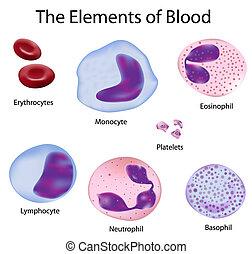den, celler, av, blod