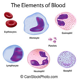 den, celler, i, blod