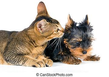 den, hundehvalp, og, killingen