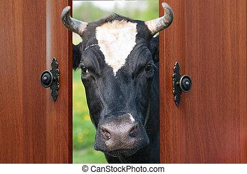 den, ko, tittade vid, den, dörr