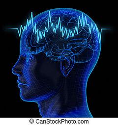 den, menneskelig hjerne