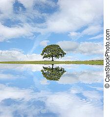 den, oaktree
