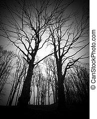 den, rädsla, in, mörk, skog