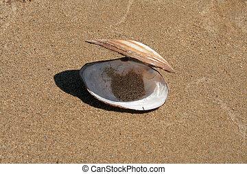 den, skal, på, sand, backgro