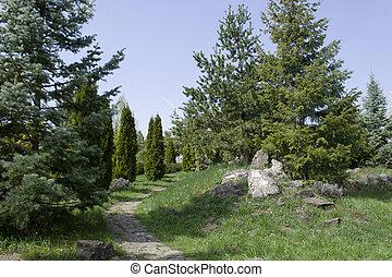 den, vacker, morgon, lätt, in, publik parkera, med, grönt gräs, field., den, grönt parkera, med, a, synhåll, av, gröna buskar