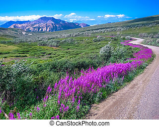Denali national park - Spectacular landscape seen from the ...